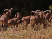 PP y PSOE cambiarán la ley para cazar las especies invasoras