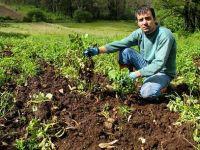 Jabalí: la Xunta estudia cambiar protocolo para reducir daños
