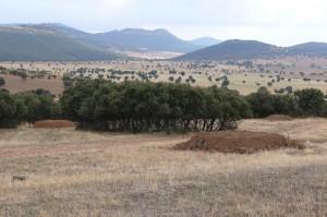 Es mejor construir varios majanos cercanos para favorecer la extensión territorial de los conejos.