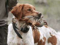 Se prohíbe cortar el rabo a los perros, sin excepciones
