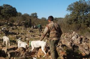 350 - Populismo y politica en la caza (6) rehala