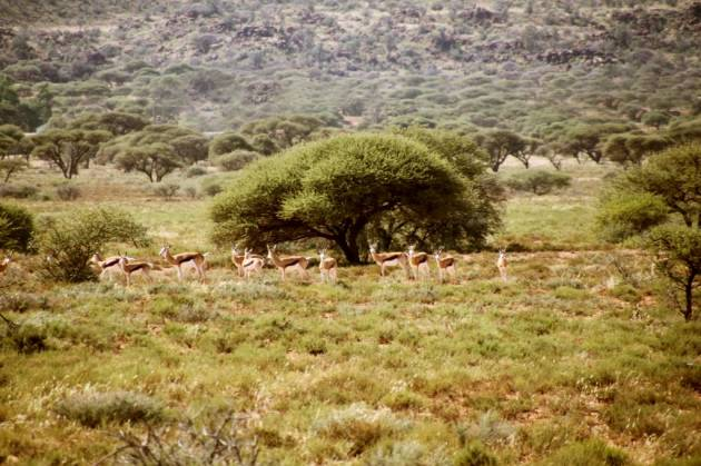 358 - Antilopes