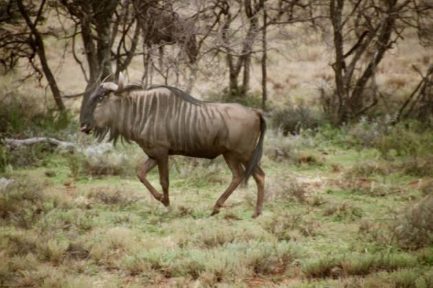 358 - Antilopes (6)