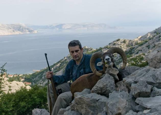 359 - Muflones Libres En Croacia (2)