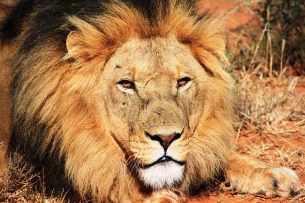 360 - Grandes cazadores de leones