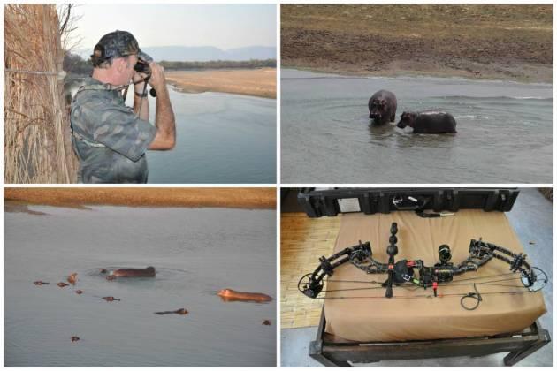 361 - Hipopotamos del Luangwa (1)
