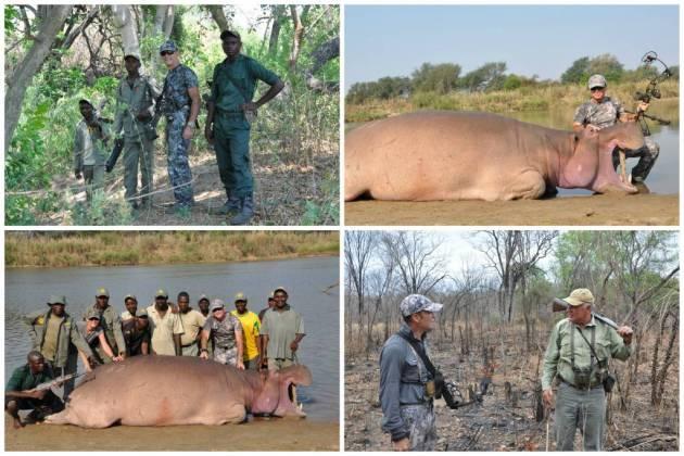 361 - Hipopotamos del Luangwa (2)