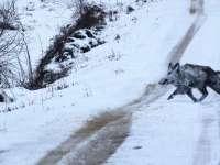 ¿Son las olas de frío realmente perjudiciales para la fauna silvestre?