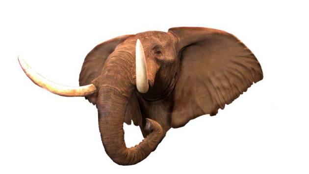 trofeo elefante