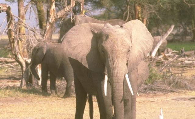 elefante 3 © SCI