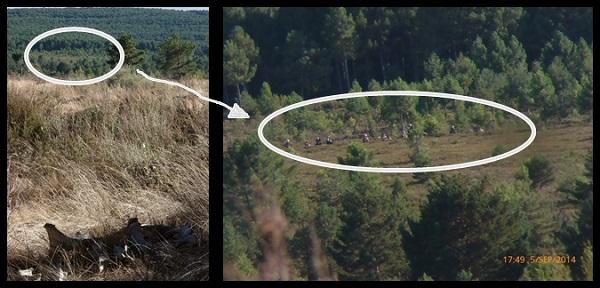 Foto tomada desde el cebadero denominado 'Guardalabá' durante el Festival Territorio Lobo. Dentro del círculo, entre la vegetación, se aprecia como un grupo de personas se encuentran fuera de la pista más cercana. © tercerainformacion.es