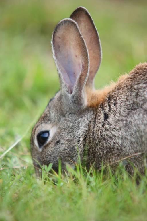En portada. Riesgos Innecesarios. Conejo