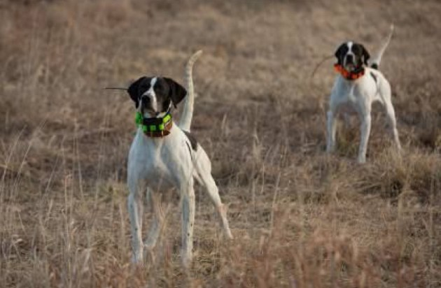 perros dispositivos de rastreo Garmin-1