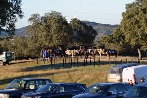 mulas caballerías navalasnoviejo montería sierra caza nv (8)