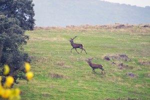 rosalejo montería sierra cazas (7)