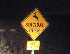 ciervos suicidas