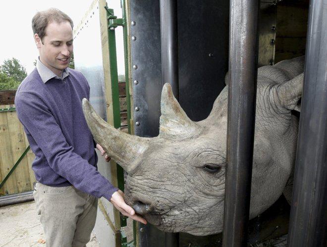 El Príncipe Guillermo con un rinoceronte en un zoo de Inglaterra. POOLREUTERS