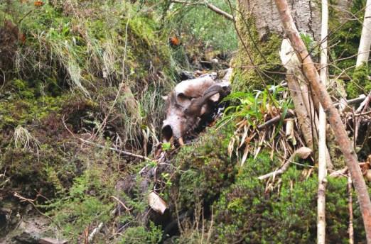 restos oso muerto 1 copy Principado de Asturias