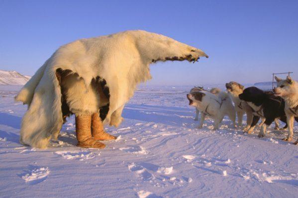 inuit camuflado para cazar osos polares
