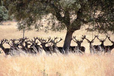3 ciervos lagunes 2016