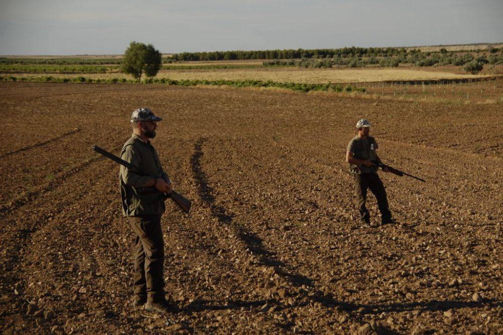 25 descaste conejos con escopeta blaser F16 cazador