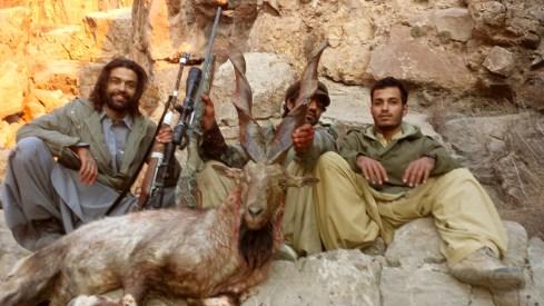 6 markhor de suleiman pakistan rececho