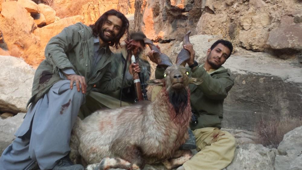 7 markhor de suleiman pakistan rececho
