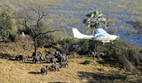 Censo del Gran Elefante GEC  conteo manadas elefantes