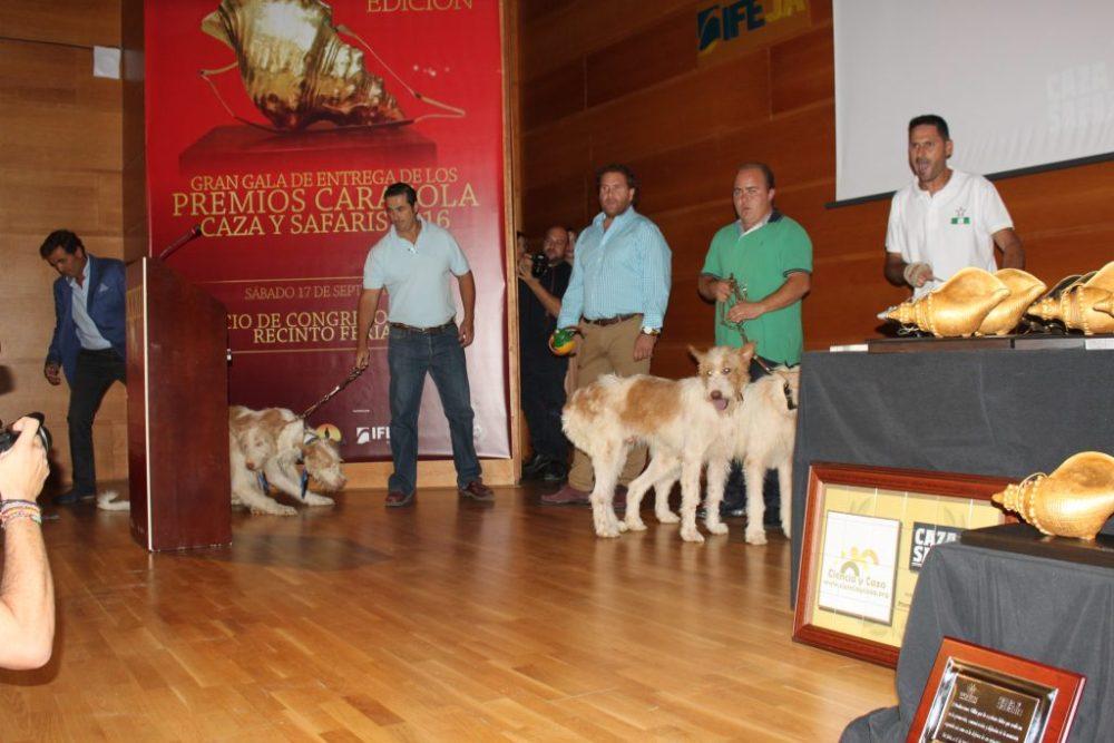 Los perros de rehala también fueron protagonistas de esta gala montera.
