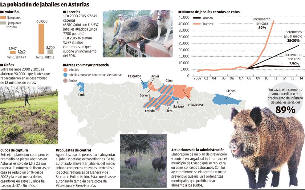 poblacion-jabalies-asturias