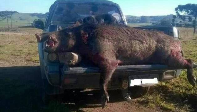 jabali-140-kilos-navarra