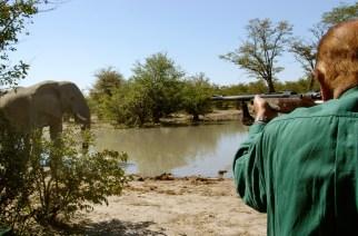 Los trece cazadores de los mil elefantes (I)