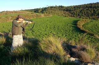 Caza práctica del corzo: consejos para su abate