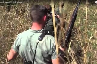 Cazando búfalos en Mozambique con el Mauser M 98 Magnum