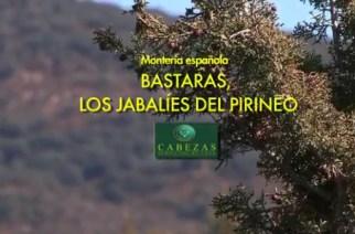 Montería en 'Bastaras', los jabalíes del Pirineo