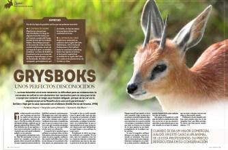 Grysboks, unos perfectos desconocidos