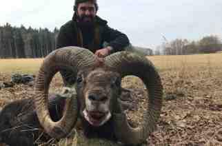 Primeros resultados de muflones en República Checa con Cabezas SC