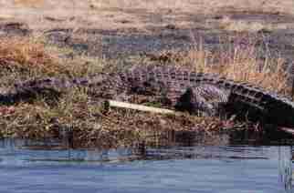 Cazador sudafricano muere devorado por dos cocodrilos en Zimbabue