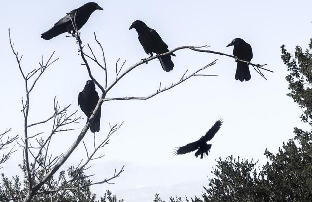 CONCURSO DE DISFRACES PORTAL GLOOK 2018: Bases e inscripciones Cuervos