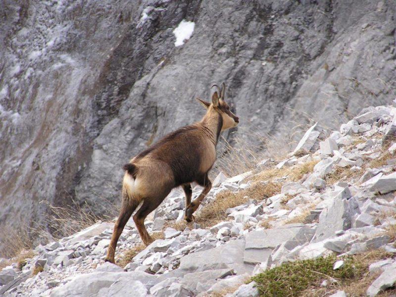 sostenibilidad de la caza