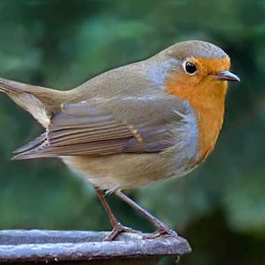 152 aves protegidas