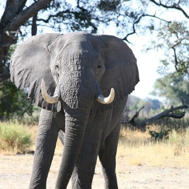 elefantes en