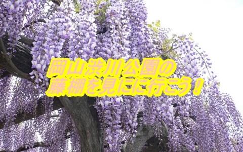 玉野渋川藤まつり2019の駐車場とアクセスを確認!開花状況と見頃もチェック!