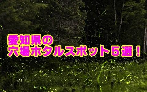 愛知県のホタルの見頃と穴場スポット5選!観賞のポイントも確認!