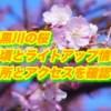 目黒川の桜の見頃とライトアップ情報2019!場所とアクセスを確認