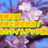 大阪城公園の桜2019見頃と開花状況!屋台とライトアップ情報も確認!