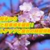東金桜まつり2019の日程と駐車場を確認!ライトアップと屋台の時間情報も!