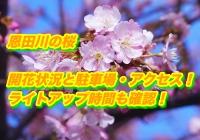 恩田川の桜2019/開花状況と駐車場・アクセスまとめ!ライトアップ時間も確認!