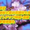 南伊豆の河津桜と菜の花2019/開花と見頃!ライトアップ時間・混雑・駐車場情報も!