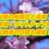 涌谷城の桜開花と見頃2019!駐車場・ライトアップ時間と東北輓馬の日程も確認!
